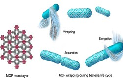 تبدیل دی اکسیدکربن به مواد شیمیایی مفید توسط باکتری های شکارچی
