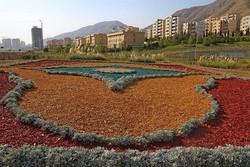 چیپس درختی به جای چمنکاری برای اولین بار در غرب تهران