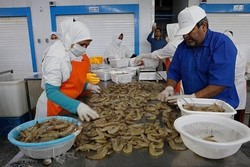 Exports of aquatic animals at 20% growth in H1