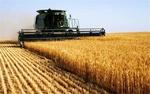 ۱۳ میلیارد تومان کرایه حمل به گندمکاران کشور پرداخت شد