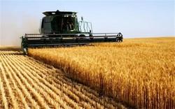گندمی که بوی خاک می داد/ خودکفایی با طعم شن و ماسه