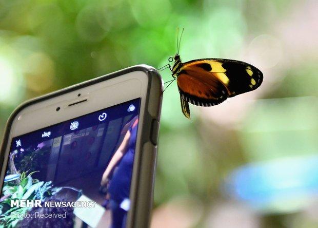 نمایشگاه پروانه ها در آمریکا