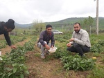 گل گاوزبان های جوان آزادشهری امید مردم منطقه شد