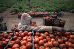 توقیف محموله گوجه فرنگی قاچاق در گذرگاه مرزی چذابه