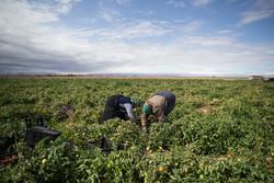 بردخون فراموش شده است/ لزوم رفع مشکلات کشاورزان آبدان