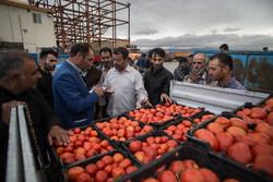 جلوگیری از خروج ۴۰۰ تن گوجه فرنگی قاچاق توسط مرزبانان خوزستان