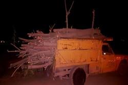 نگرانی مردم از قطع درختان در شوشتر