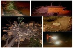 قطع شبانه درختان در همدان/ وقتی رنگ سبز شهر کمرنگ میشود