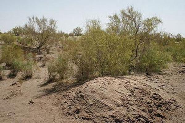 نابودی پوشش گیاهی برخی مناطق کشور/ بیابان زدایی در شرق اصفهان,
