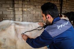 کمبود نیروی انسانی معضل دامپزشکی خوزستان است