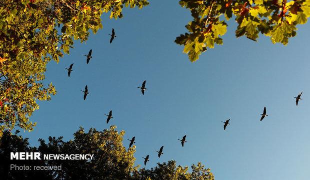 پاییز هزار رنگ