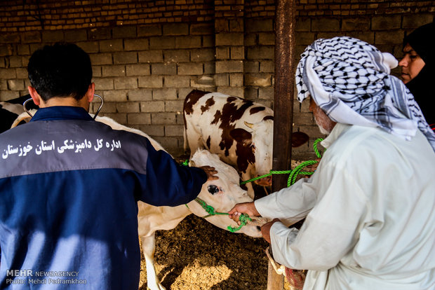 استقرار اکیپ های دامپزشکی سایر استان ها در خوزستان