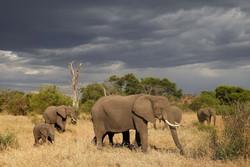 سفر به منطقه حفاظت شده گرومتی گامه تانزانیا
