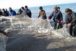 سرانه مصرف ماهی در مازندران ۱۳.۸ کیلوگرم است