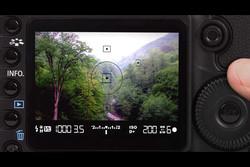 انتخاب ۲۳ عکس برای نمایشگاه «ثبت جهانی جنگل های هیرکانی»