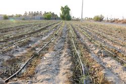 بازگشت بودجه انتقال آب یک اقدام غیرکارشناسی است
