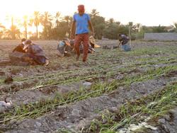 گسترش فقر کارگران روستایی با حذف حداقل مزد/هزینه۲.۸میلیونی زندگی در استانهای محروم