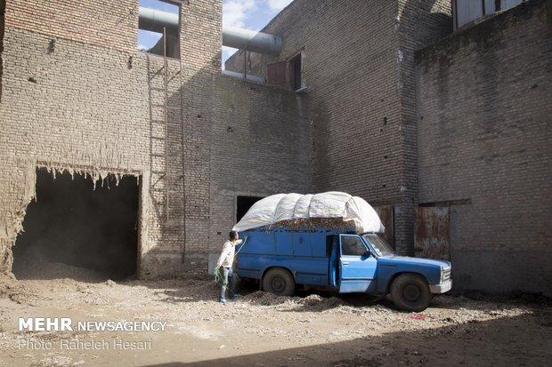 رحلة القطن من المزارع إلى المحالج في كركان شمال شرق ايران