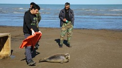VIDEO: Lifeguards rescue Caspian seal