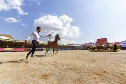 نخستین جشنواره ملی اسب دره شوری در فرخ شهر برگزار شد