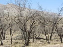 خشکسالی از طرحهای انتقال آب سبقت گرفت/ کم آبی بی سابقه در کرمان
