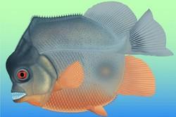 شناسایی فسیل ۱۵۰ میلیون ساله از یک ماهی خونخوار