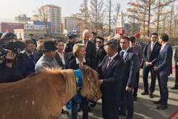 وزیر دفاع آلمان یک اسب مغولی هدیه گرفت