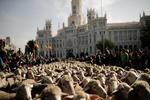 Madrid'de koyunlar şehir meydanında!