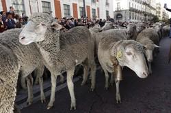 بررسی ژنهای بزرگ اثر در چندقلوزایی نژادهای گوسفند بومی