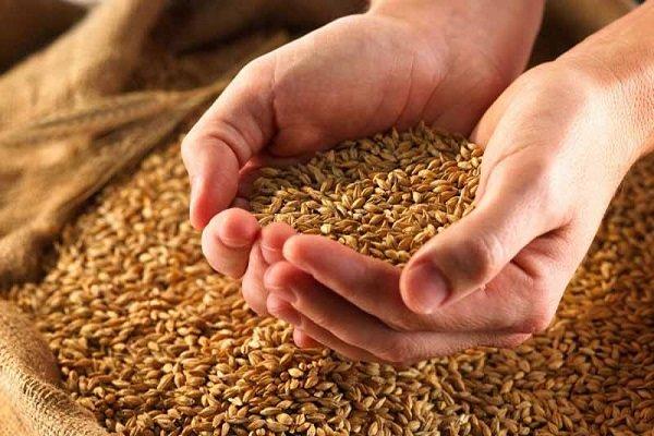 Wheat imports minimize into zero level