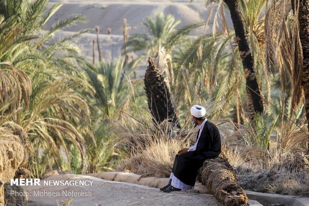 امرار معاش یک روحانی کشاورز در کنار تبلیغ