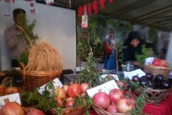 ضرورت احداث نهالستان انار در مازندران