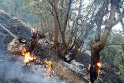 آتش در باغات روستای سنگان طارم مهار شد