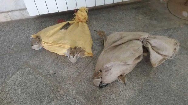 کشف ۲ قطعه پرنده نایاب و دستگیری فرد قاچاقچی در آبادان