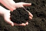 Iran to export agri. bio-fertilizers to Africa