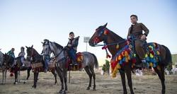 اسب «کُرد» شناسنامهدار میشود /ضرورت راهاندازی مرکز دامپزشکی غرب در کرمانشاه