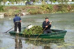 جمع آوری گیاه مهاجم سنبل آبی از آبگیر سفیر امید آستارا