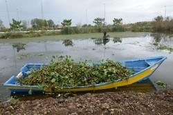 """تنظيف مياه الشمال الايراني من""""وردة النيل""""/فيديو"""