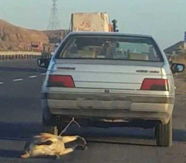 صلاحیت روانی رانندگان حیوانآزار بررسی میشود
