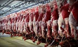 ۱۷۰ تن گوشت قرمز در چهارمحال و بختیاری ذخیره سازی شد