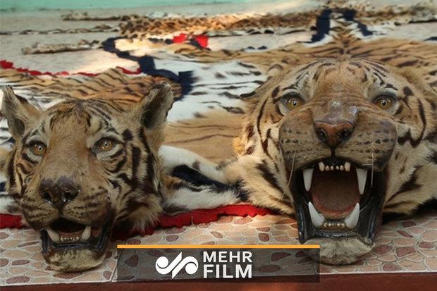 فلم/ گذشتہ 50 سال میں 50 فیصد حیوانات ختم ہوگئے