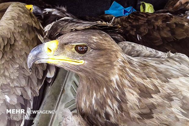 مرگ 27 عقاب در سروستان