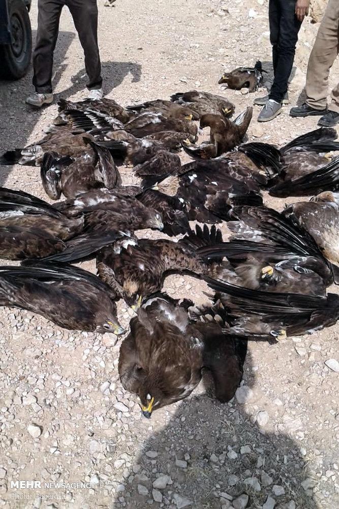 مرگ ۲۷ عقاب در سروستان
