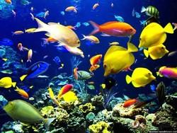فعالیت ۵۰ مرکز تکثیر و پرورش ماهیان زینتی در کرمانشاه