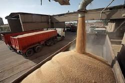 ۴۵ مرکز در زنجان برای خرید گندم از کشاورزان پیش بینی شده است