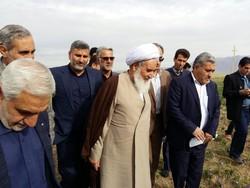 توسعه کشت زعفران موجب اشتغالزایی در کرمانشاه میشود