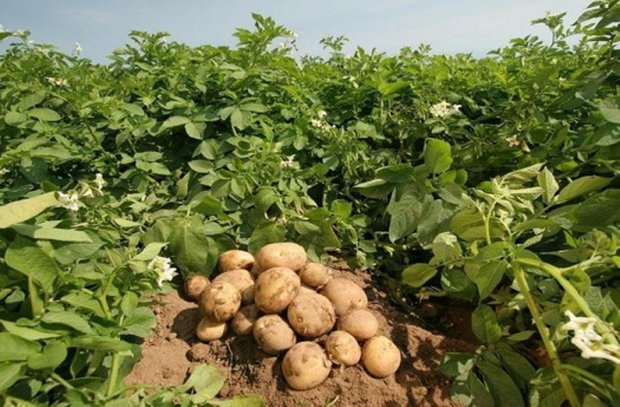 تغذیه ناسالم عامل بیماریها/ محصولات کشاورزی شناسنامهدار شوند