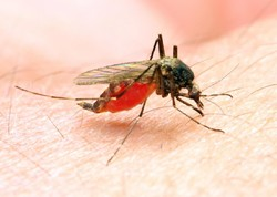 WHO lauds Iran for nearing total eradiction of malaria