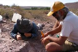 کشف بقایای ۱۱۰ میلیون ساله دایناسورها در آرژانتین