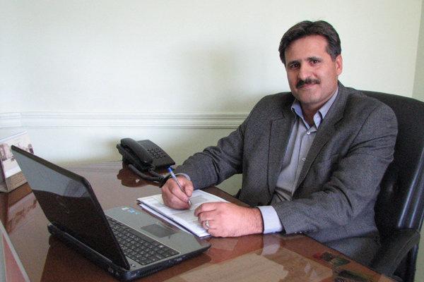 کشت پنبه در استان قزوین جانی دوباره گرفت